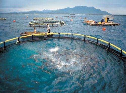 深远海养殖平台相关技术提供咨询、论证及评审服务采购项目